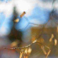 В ожидании весны :: Михаил Луговой