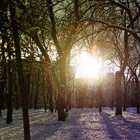 Январь :: Мария Кривчук