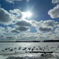 Лебединное не-озеро!:) :: Lina Liber