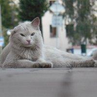 Житель улицы :: Татьяна Шевелёва