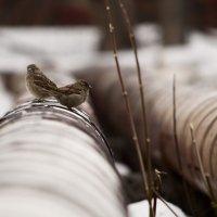 КПД котла, теплота сгорания топлива,  цена 1 Гкал – нам, ни к чему! :: Андрей Верясов