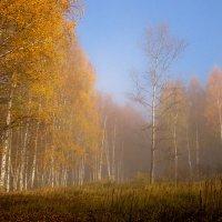 Была осень... :: Николай Белавин