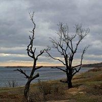 Деревья тоже любят! :: Dr. Olver