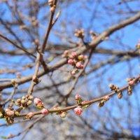 весна :: Alena Fialko