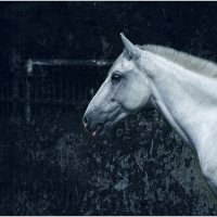 Blue Stallion :: Константин Шестов