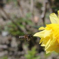 Пчелка и цветочек) :: Виолетта Тибилова