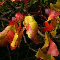 осенние листья :: valeriy g_g