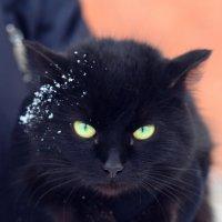 Замерзший кот :: Катерина Мишкель