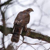 Удачная охота :: Павел Myth Буканов
