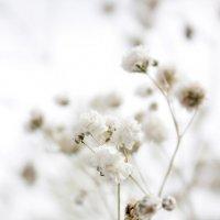 нежность и простота.. :: Катрин Моргачева