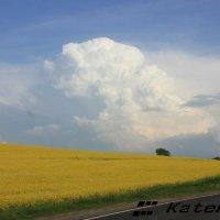 красота белорусского поля... :: KateRina K