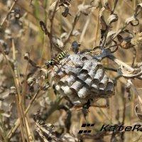 осиное гнездо :: KateRina K