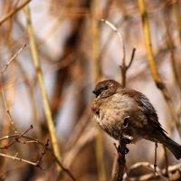весенний птах :: Анжела Новикова