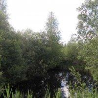 river :: полина кама
