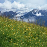 Альпийский луг :: Вальтер Дюк