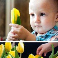 Желтые тюльпаны :: Анастасия ГАВ Гусевская