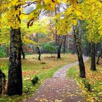 Тропинка в осень. :: Татьяна Беляева