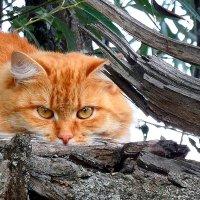 Я тебя не знаю!...не подходи!..... :: Ира Егорова :)))