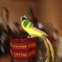попугай :: Натали Михеева