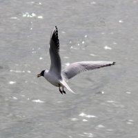 чайки :: Олег Ивасенко