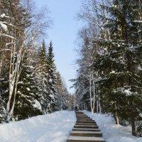 Зимний пейзаж :: Алексей Пахомов