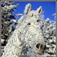 Белая лошадь :: Василий Хорошев