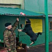 Летящая собака :: Яков Реймер