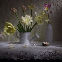 Желтые тюльпаны. :: Svetlana Sneg
