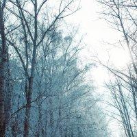 Морозная дорога :: Евгения Шапошник