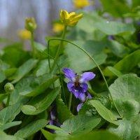 Весна в лесу. :: *MIRA* **