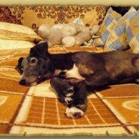 Найда...подражая кошкам ,не плохо устроилась на кровати.. :: Людмила Богданова (Скачко)