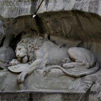 Умирающий лев... :: Larisa Ulanova