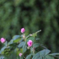 Цветочный хоровод-33. :: Руслан Грицунь