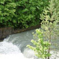 Из озера Рица  вытекает единственная река — Юпшара. :: Елена Павлова (Смолова)