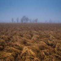Призраки :: Виталий Курин