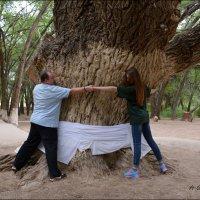 Киели-агаш – священное дерево. :: Anna Gornostayeva