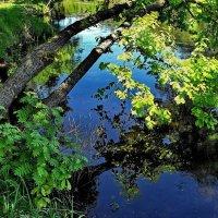К речной склоняясь синеве... :: Лесо-Вед (Баранов)