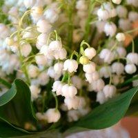 Ландыш цветет :: Serg