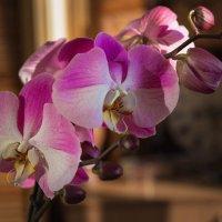 Орхидея :: Сергей СВ