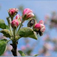 Бедная яблонька... :: Валентина Данилова