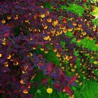 Краски весны :: rimgis