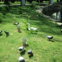 Одно беспокойство, нам уточкам от этих голубей, того и гляди что-нибудь сопрут...:)) :: Ольга Кривых