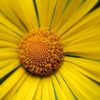 цветочек :: Kamilla Gazizova