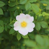 Цветочный хоровод-37. :: Руслан Грицунь