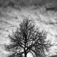 Дерево :: shvlad