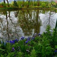 колдовское озеро :: Александр Корчемный