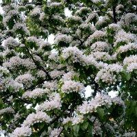 Буйное цветение :: Валентина Папилова