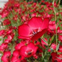 Красная :: Gudret Aghayev