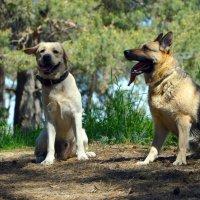 Все собаки как собаки,а я у мамы дурачок)) :: Наталья Шелыганова
