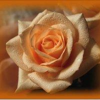 Прикосновение акварелью к розе :: Лидия (naum.lidiya)